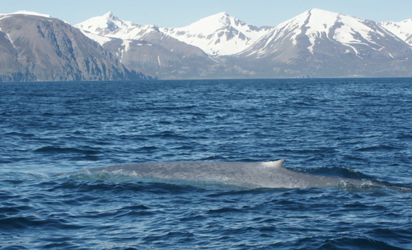 diving-deeper-into-the-sound-of-blue-whales